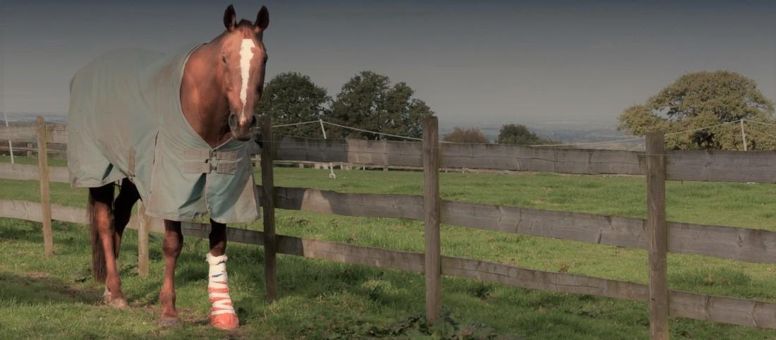 horselegbandage-b